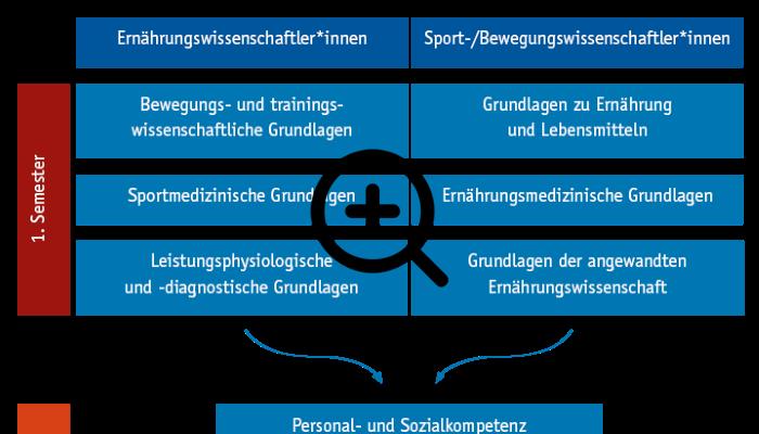 Grafik Curriculum für Sport-/Bewegungs- und Ernährungswissenschaftler*innen