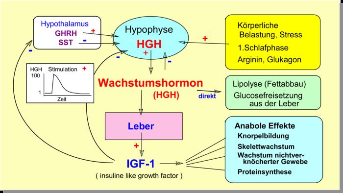 Peptidhormone Institut Fr Biochemie Deutsche